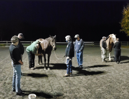 V.E.T.S Partner with High Hopes Therapeutic Riding